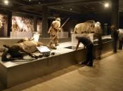 Gallo-Roman Museum Interior Tongeren